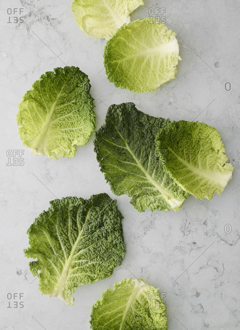 Savoy cabbage leafs on counter top