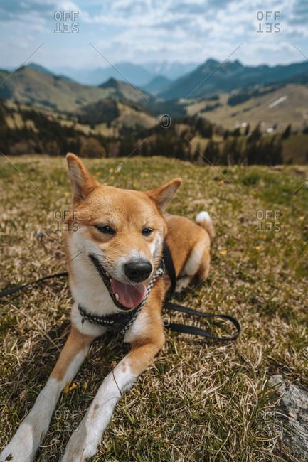 Europe, Germany, Bavaria, Bavarian Alps, Sudelfeld, Tatzelwurm, Brannenburg, Bayrischzell, dog on leash, smiling