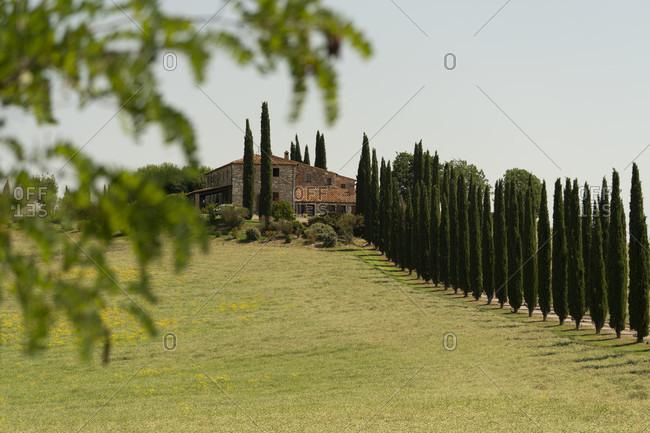 Europe, Italy, Agriturismo Covili, Farmhouse Poggio Covili, Cypress Alley, Tuscany, Tuscan Landscape, Province of Siena, Castiglione D'orcia,