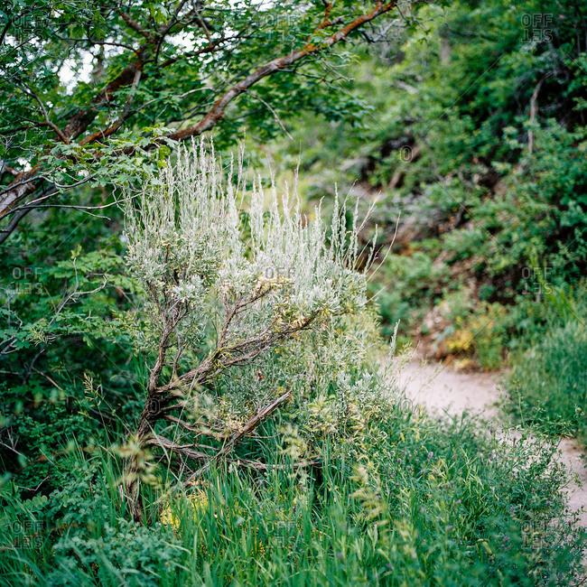 Green landscape in rural Utah, USA