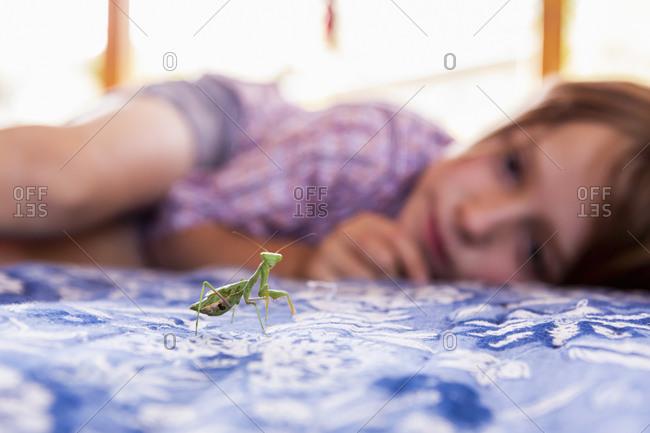 7 year old boy looking at a praying mantis