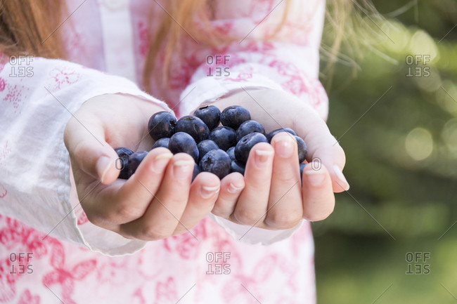 Close up full frame view of female child holding large ripe blueberries in both hands