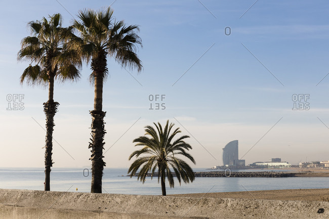 Palm trees by the Samorost beach with the hotel w Barcelona in the distance, port Olympic, Barcelona, Catalonia, Spain