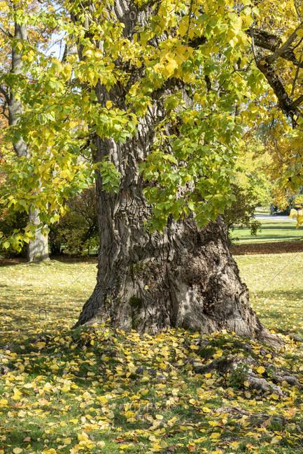 Kurbad marienbad, tree in autumn, czech republic,