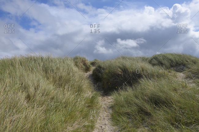 Footpath to the beach, vorupor, national park thy, thirsted, north sea, north Jutland, Denmark