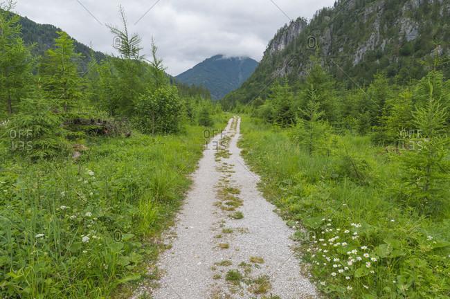 Dirt road in summer, lake almsee, almtal, upper austria, austria