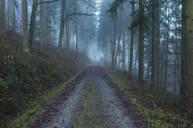 Forest path, wall urn, Baden-Wurttemberg, Germany