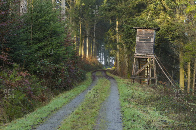 Forest path with hunting blind, wall urn, Baden-Wurttemberg, Germany