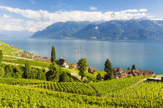 Elevated view on the lavaux terraced vineyards above lake geneva, montreux riviera, unesco world heritage
