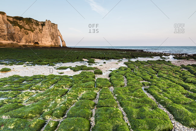 Green kelp covered rocky beach in front of the rock formation port d'aval cliff, a natural arch at sunrise, cote d'albatre, the alabaster coast, pays de caux, seine-maritime