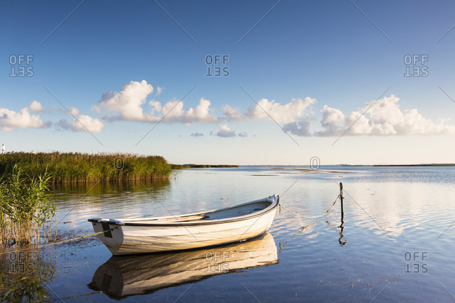 Rowing boat is moored by a reed belt, mon island, seeland region