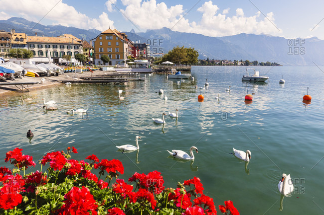 September 16, 2014: Flower boxes with red geranium flowers in front of the city by lake geneva and the alps