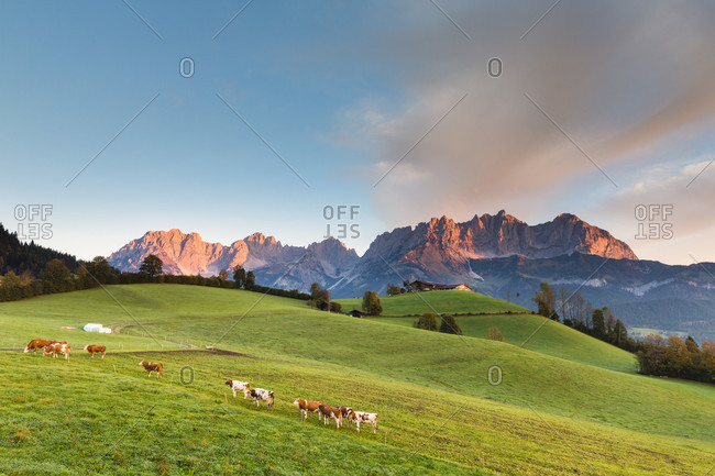 Meadow and farm in front ot the mountain range 'wilder kaiser' at sunrise, autumn