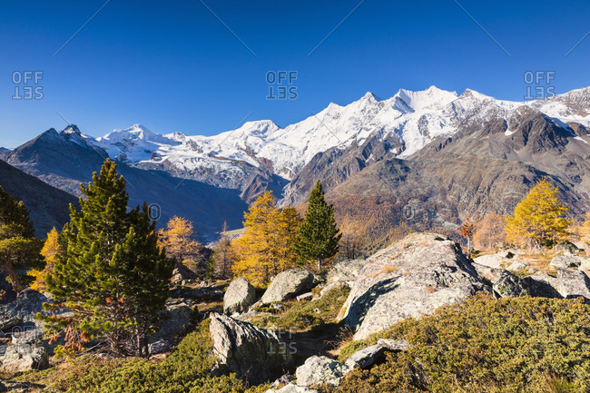 View from kreuzboden with autumnal larch trees to the mischabel mountain group and sass fe in the valley, autumn