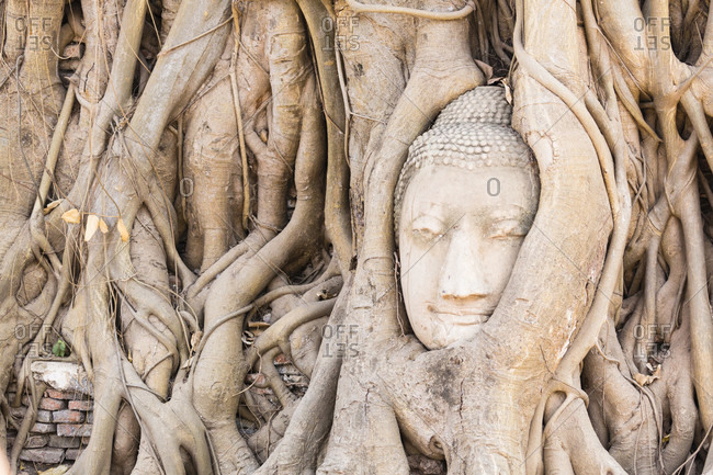 Buddha head surrounded by tree roots at wat phra mahathat, close-up, unesco world heritage site