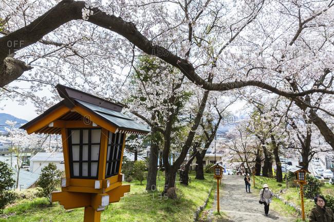 April 12, 2015: Lantern along a path by blooming cherry trees at the chureito pagoda