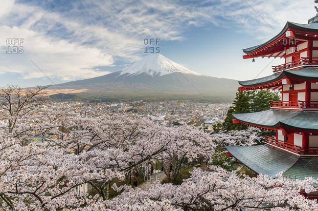 Chureito pagoda and blooming cherry trees in the hills of fujiyoshida in front of mount fuji, arakura-yama sengen-koen park