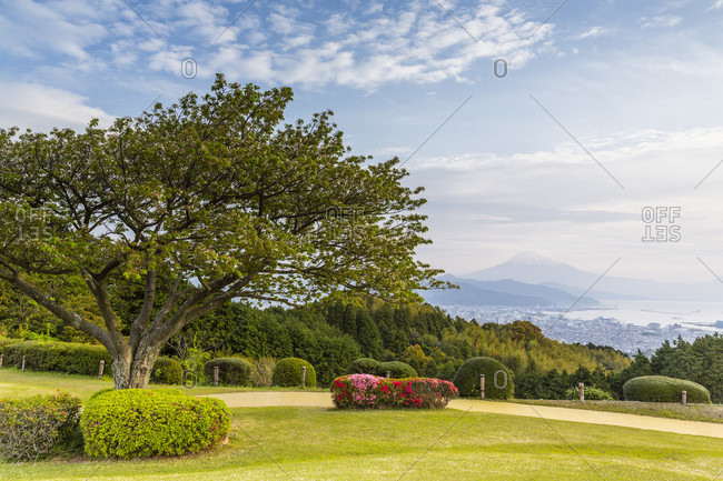 Cherry tree and blooming azalea in front of shimizu port and mount fuji
