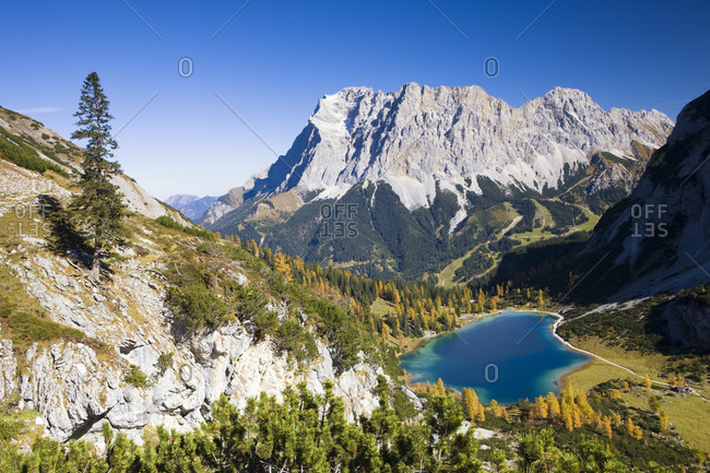 Larch trees at lake seebensee by zugspitze, autumn