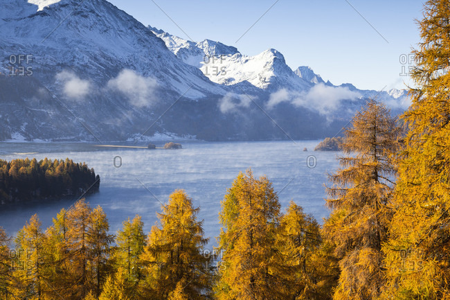 Larch trees in front of lake sils in morning fog and piz de la margna, autumn, engadin