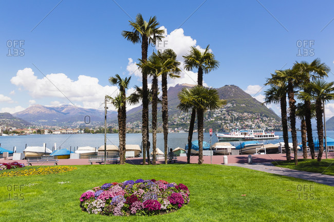 June 2, 2018: Chinese hemp palm trees (trachycarpus fortunei) and flower beds in front of monte san salvatore at lago lugano, spring