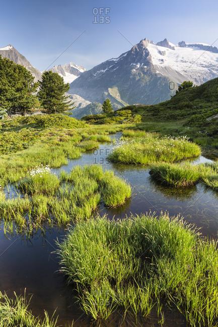 Pond nearby swiss alps aletsch glacier, unesco world heritage, rhone valley