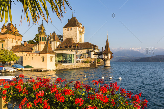 Geranium flower boxes in front of the oberhofen castle at lake thun, sunset