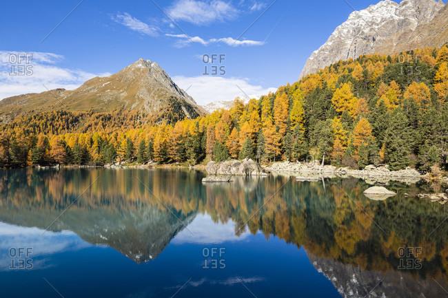 Mountain lake saoseosee surrounded by european larch trees, autumn