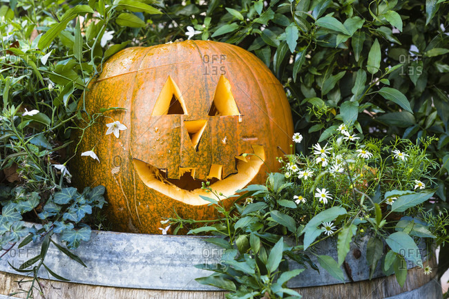 Carved halloween pumpkin on a wine barrel as decoration, autumn