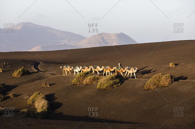 May 30, 2018: Camel drive at sunrise