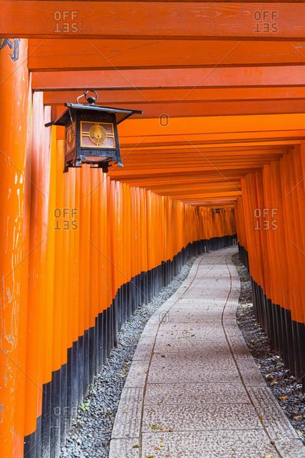 Path through ornate torii gates at fushimi-inari taisha, shinto shrine