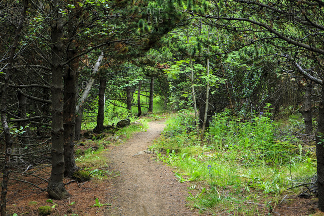 Hiking trail in the forest area in iceland,