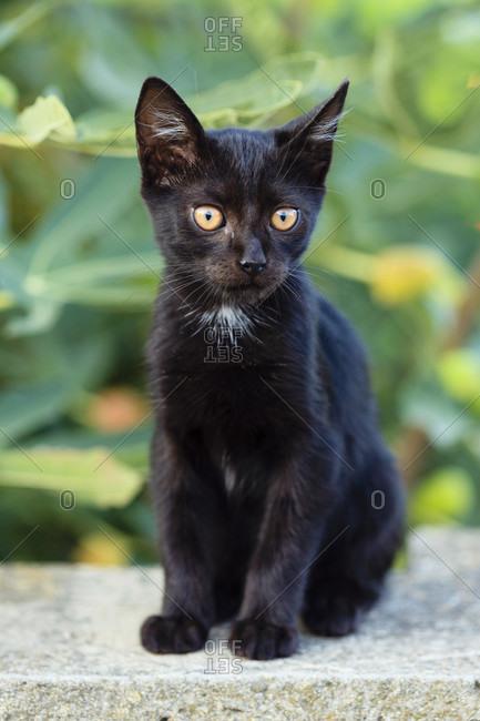 Black cute kitten sitting on the floor.