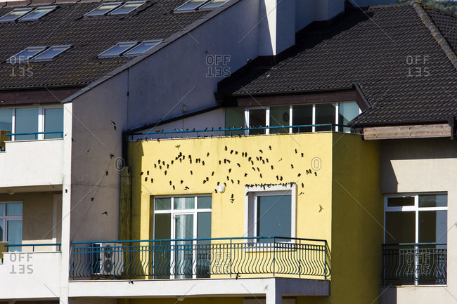 Swallows warm themselves on the house wall at sunrise, obzor, bulgaria.