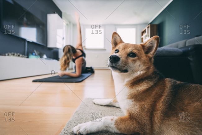 Europe, germany, rosenheim, young female is doing sports workout at home, livingroom with lazy dog