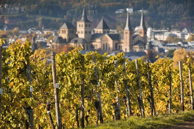 Germany - October 16, 2017: Vineyards of Riesling and S. Peter cathedral