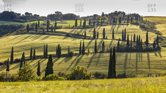 Italy - June 5, 2018: Typical landscape, road with cypress trees