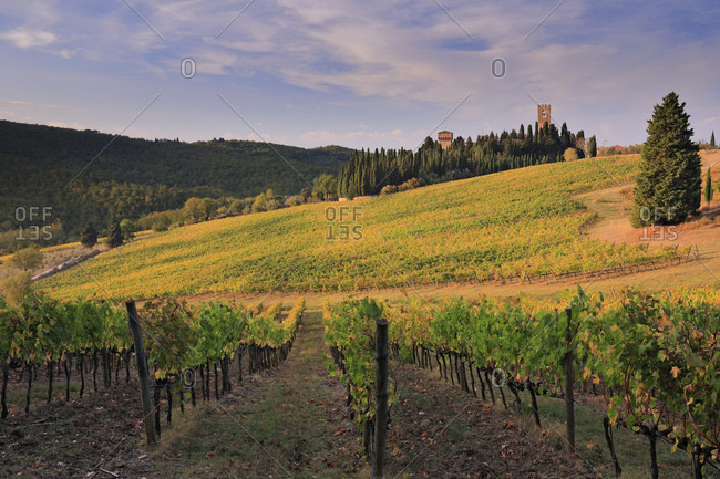 Italy - October 27, 2018: Autumn colored vineyards surrounding Badia a Passignano village and its medieval abbey