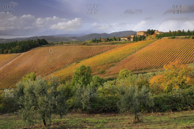 Italy - November 1, 2018: Autumn colored vineyards at the Rocca di Castagnoli castle