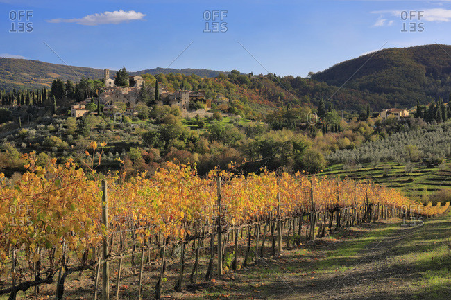 Italy - November 9, 2018: Autumn colored vineyards surrounding Montefioralle village in the background