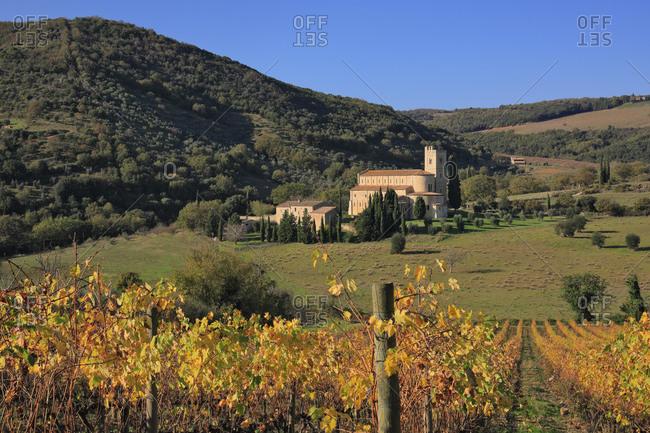 Italy - November 15, 2018: Autumn colored vineyards surrounding Sant'Antimo Abbey, near Montalcino