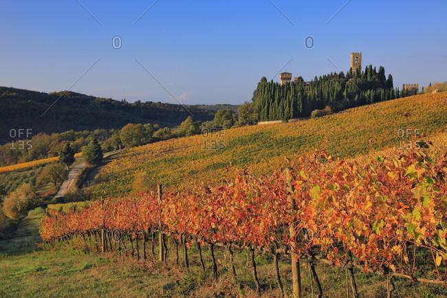 Italy - November 10, 2018: Autumn colored vineyards surrounding Badia a Passignano Abbey