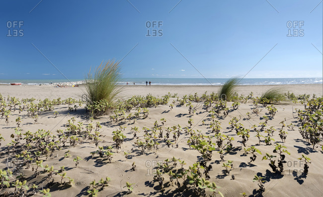 Weeds overgrown on the beach in Italy