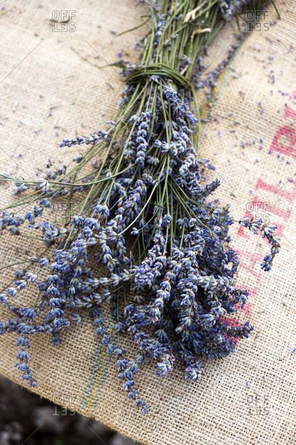 Velo Grablje, bunch of lavender flowers