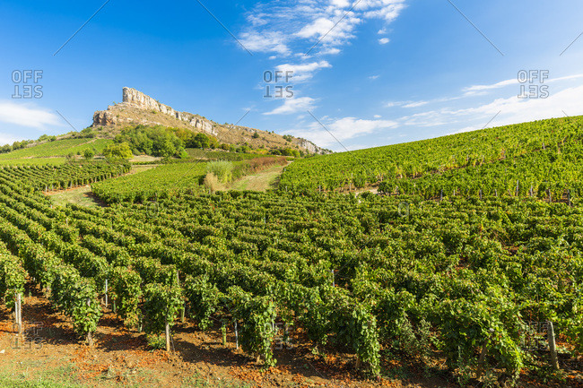 Roche de Solutre, vineyards, Bourgogne-Franche-Comte, France