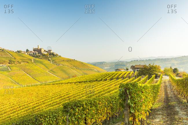 Italy - October 15, 2017: The Nebbiolo vineyards surround the village of Castiglione Falletto.