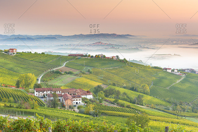 Italy - October 13, 2018: Nebbiolo Vineyards on the hills in near La Morra