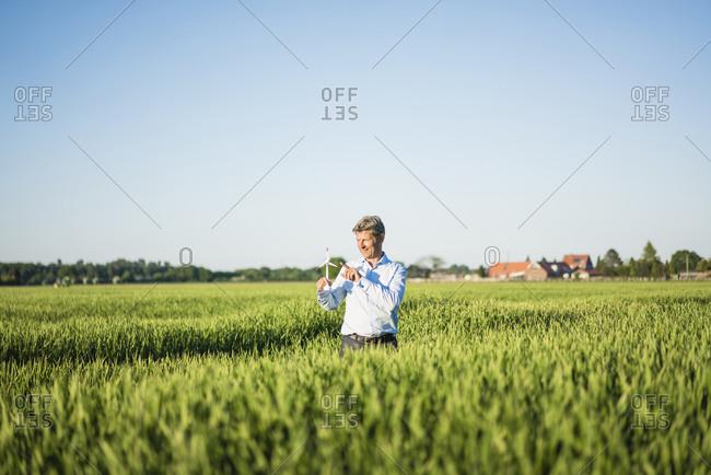 Businessman standing in grain field- holding miniature wind wheel