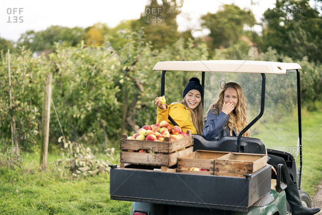 Two women with vehicle harvesting apples in orchard