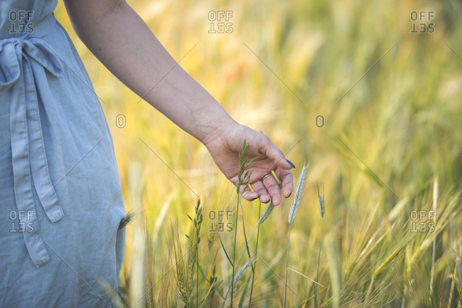 Young woman hand touching crop while standing in agricultural field